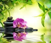 Alternativní masáž bambus zahradě na vodě
