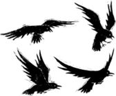 An illustrated set of four grungy Crows in flight Layered vector and high resolution jpeg files available