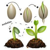 Fasi di crescita delle piante. isolato su sfondo bianco