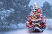 Tento strom svítí jasně na zasněžené mlhavé ráno