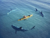 útok žraloka na lodi