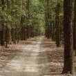 ������, ������: Dirt road passing through a forest