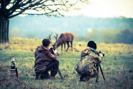 Постер, плакат: Photographers taking photo of deer, холст на подрамнике
