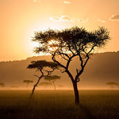 Beautiful Sunset in Massai Mara