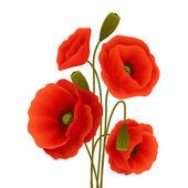 Mák virág poszter