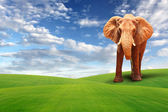Single elephant walking in grass field