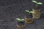 Stromy rostoucí na mince