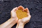 Hände halten Mineraldünger als eine Herzform über fruchtbaren Boden