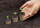 コインに生育する樹木