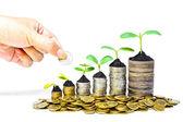 Mano dando una moneta di alberi che crescono in una sequenza di germinazione su mucchi di sviluppo sostenibile di monete - csr - - alberi che crescono sulla pila di monete - risparmio soldi