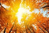 Slunce svítí na obloze mezi korunami stromů v podzimním parku