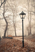 Street lamp in misty autumn forest park