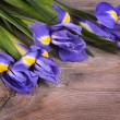 Постер, плакат: Blue irises on wooden boards