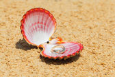 Proposal of marriage. Engagement ring in shells on the sand on t