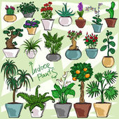 Indoor Plants hand drawn collection