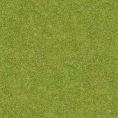 Short, flattened green grass.