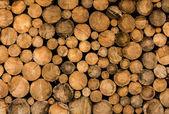Palivového dřeva