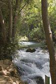 řeka hermon, přírodní rezervace banias v severním Izraeli