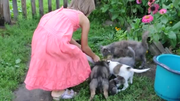 child feeding kittens and puppies