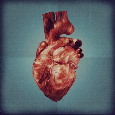 Human heart vintage blueprint.