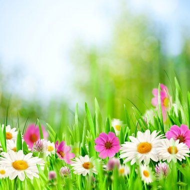 Beauty meadow. Abstract natural backgrounds for your design