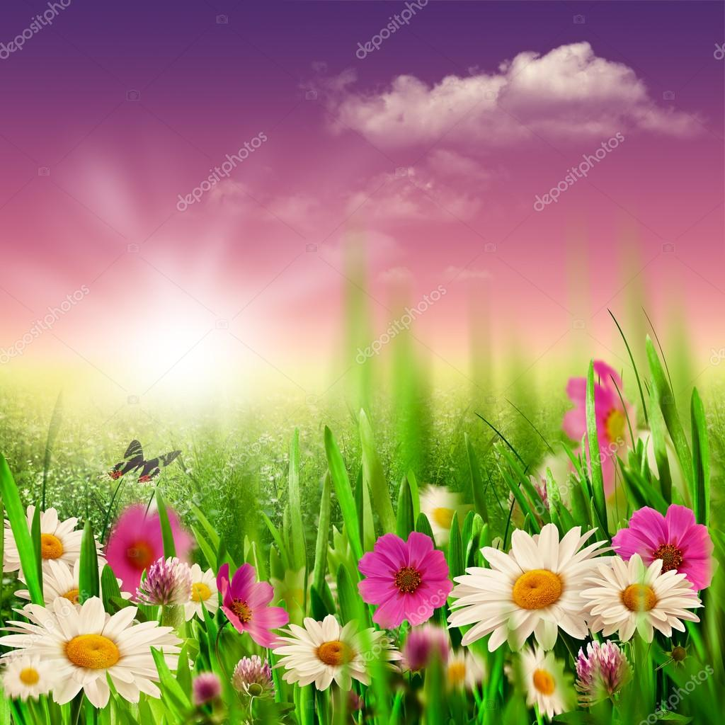 Beauty evening on the meadow, natural backgrounds