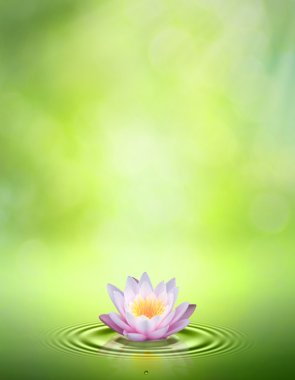 Water lily. Abstract oriental backgrounds for your design