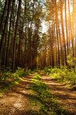 léto v lese, abstraktní krajiny pro návrh