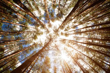 Looking up, summer backgrounds for your design