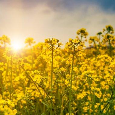"""Картина, постер, плакат, фотообои """"ранним утром на лугу постеры цветы фотографии природа"""", артикул 45588679"""