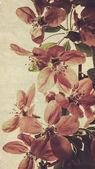 orientální výstřední květinové pozadí