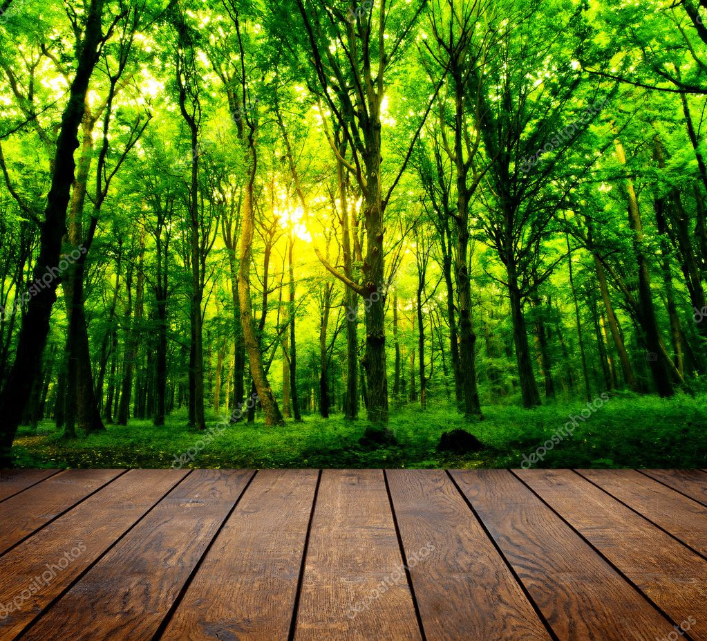 Фотообои древесины