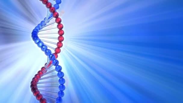 Rotating DNA molecule