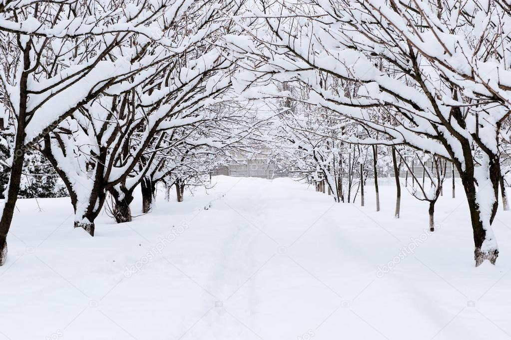 Snow alley in winter forest