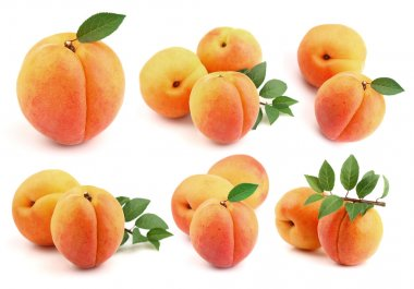 Collage from fresh apricots