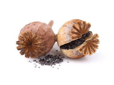 Dried poppy head with seeds