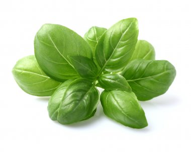 Basil leaves in closeup