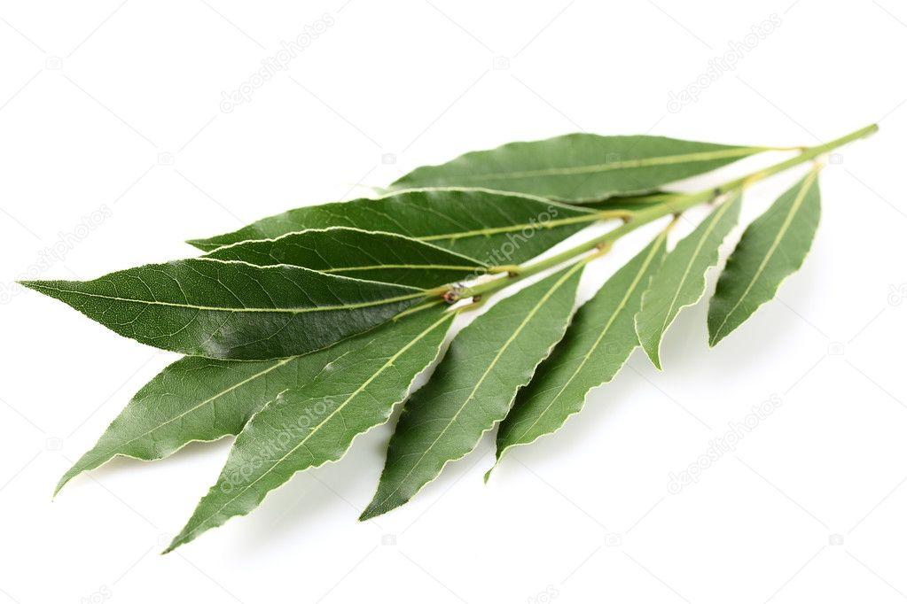 Laurel spice