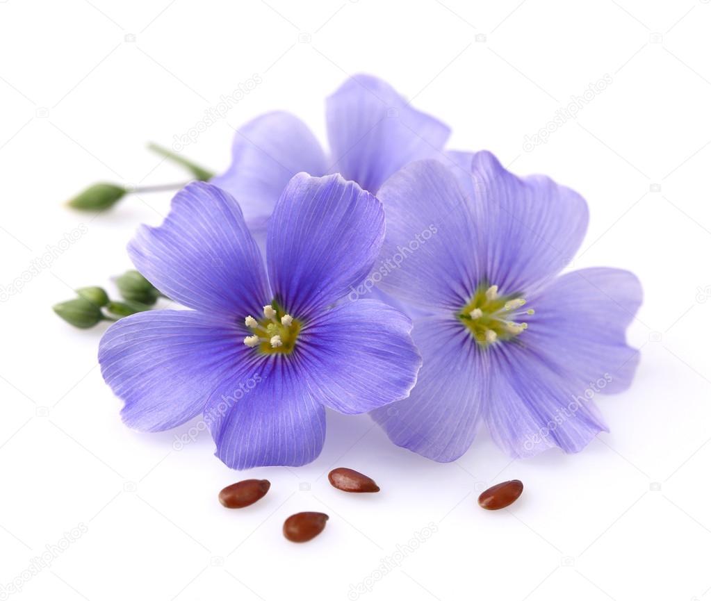 Лен. цветы