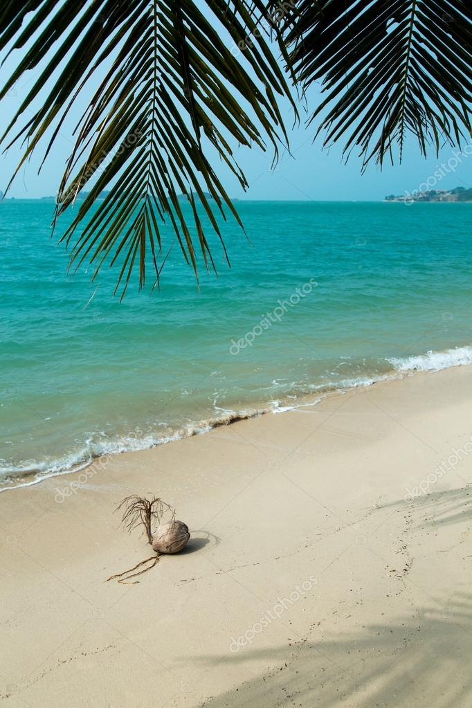 Coconut on beautiful tropical beach