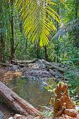 tropických džunglích jihovýchodní Asie