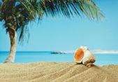 mušle na písečné pláži na pobřeží tropických