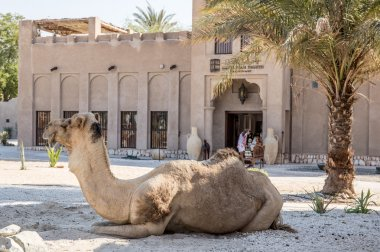 Camel on the street