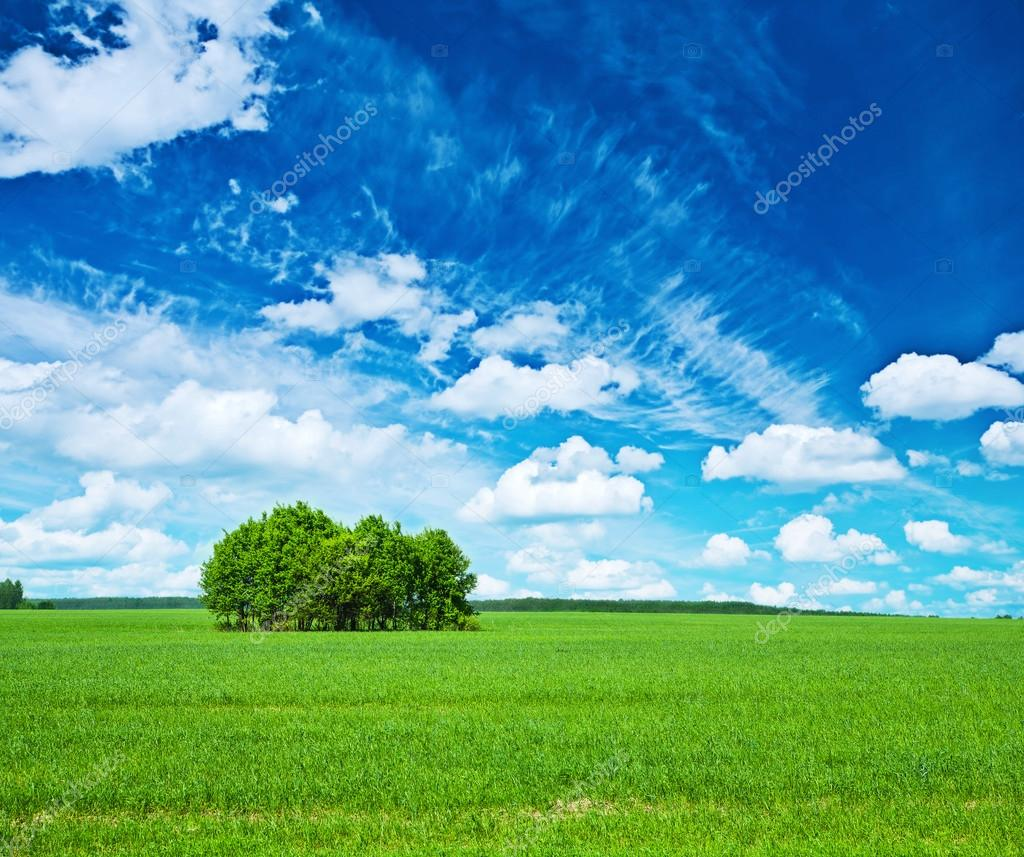view on green field and blue sky