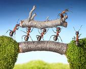 tým mravenci nesou protokolu na mostě, týmová práce