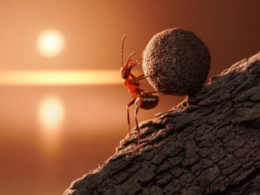 Ant Sisyphus rolls stone uphill on mountain