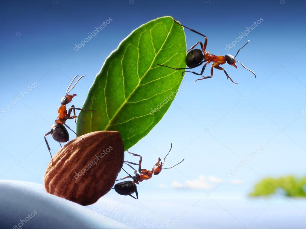 Ants sight land in ocean, crew of yacht, teamwork
