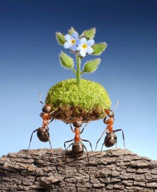 Ants bring life above dead rocks