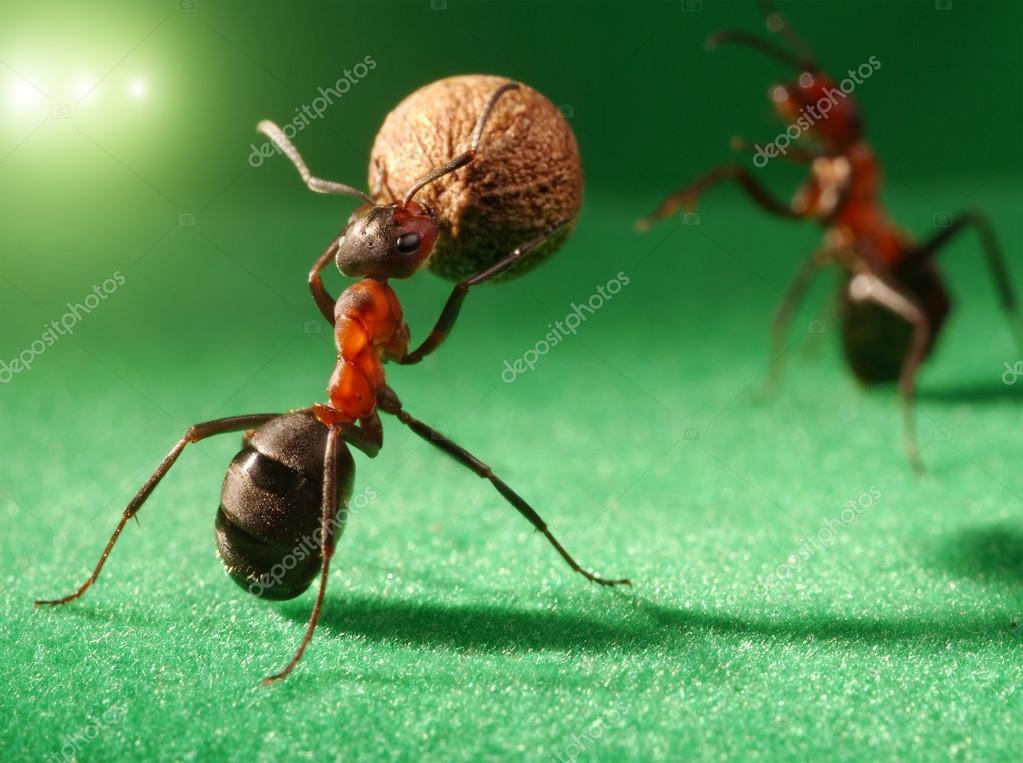 Ants night football