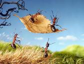 Fotografie Ameisen fliegen auf Blatt, Ameisengeschichten